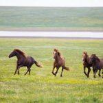 【競馬ニュース】スピード自慢の3歳馬が集結!!【第32回ファルコンステークス】