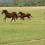 【競馬速報】有力馬が集結!!伝統の長距離重賞【第66回日経賞】