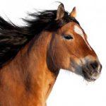 【競馬結果】「ノーブルマーズ」控える競馬もOK!!!高倉騎手との絆で大番狂わせを起こす!!!【宝塚記念】