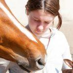 【競馬ニュース】○○で3番人気以内だった馬が5連勝中!?【第23回プロキオンステークス】予想まとめ
